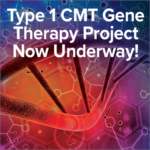 Type 1 CMT Gene Therapy Project Now Underway